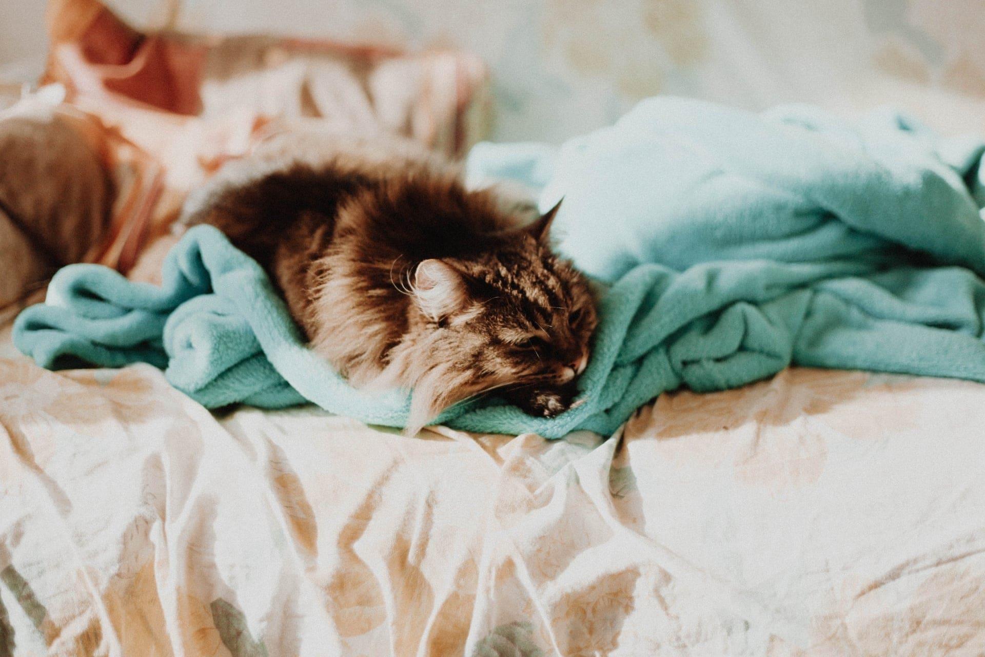 bijslapen bruiloft bed poes kat huwelijksreis