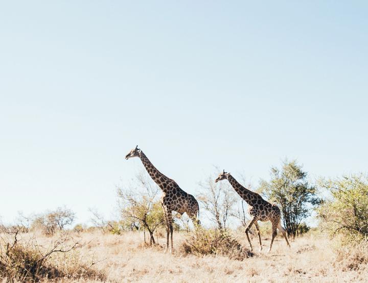 Tips en inspiratie voor een honeymoon naar Zuid-Afrika