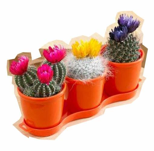 Drie-cactusjes---bedankjes-voor-bruiloft